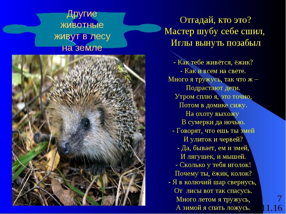 Другие животные живут в лесу на земле Отгадай, кто это? Мастер шубу себе сшил...