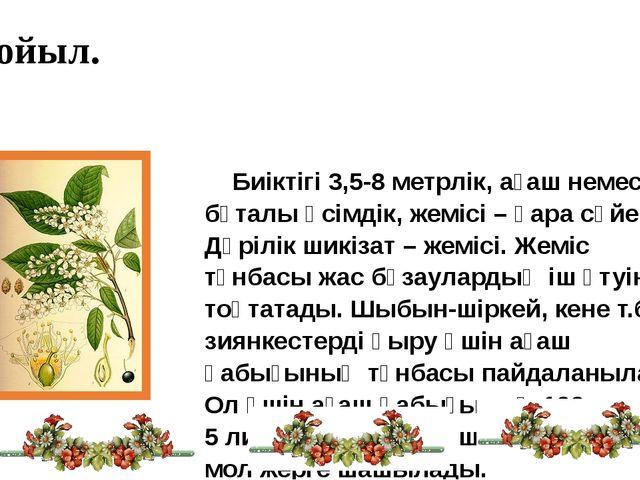 Мойыл. Биіктігі 3,5-8 метрлік, ағаш немесе бұталы өсімдік, жемісі – қара сүйе...