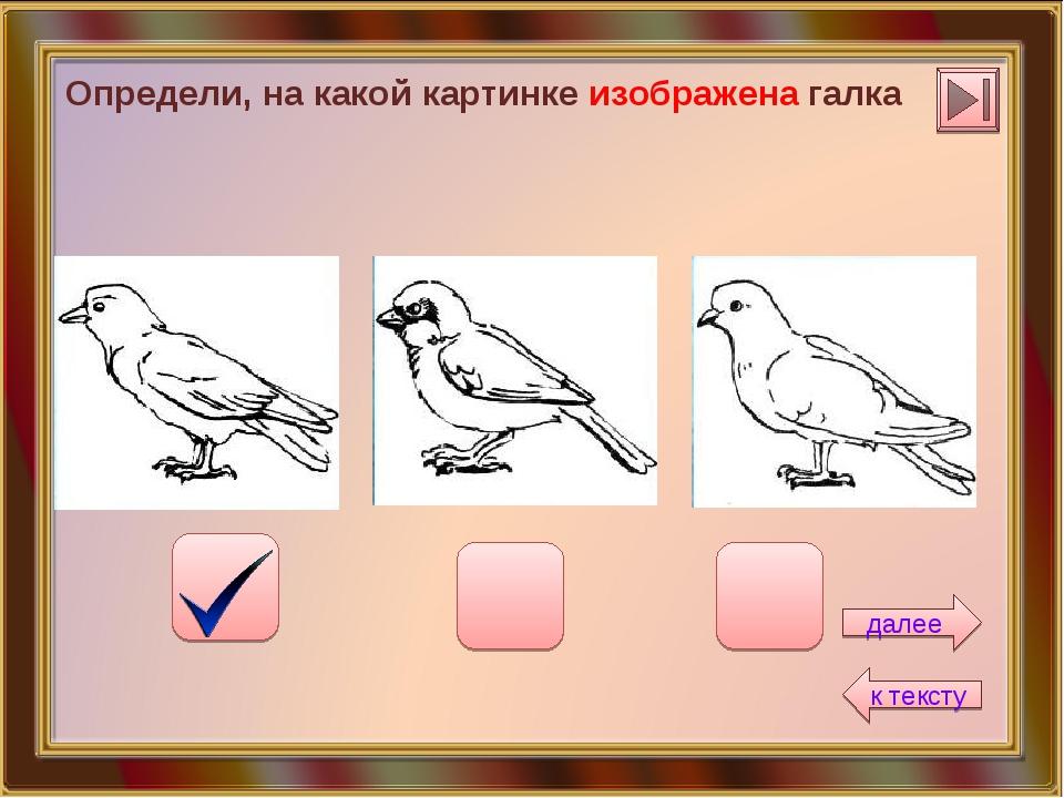 Определи, на какой картинке изображена галка далее к тексту
