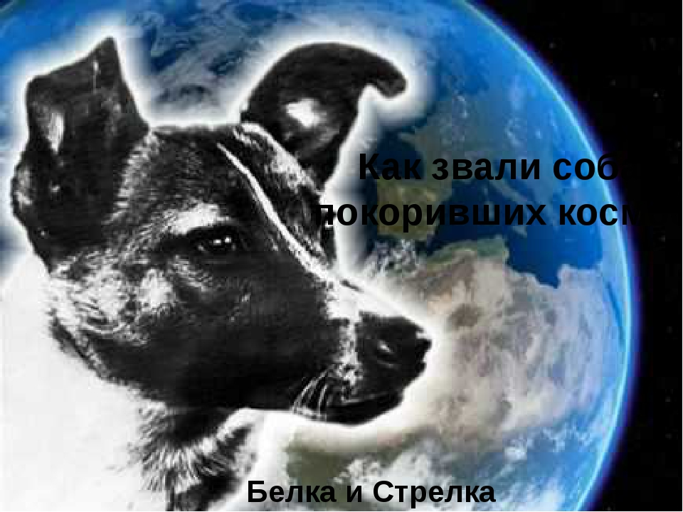 Как звали собак, покоривших космос? Белка и Стрелка