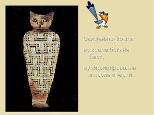 Священная кошка из храма богини Баст, мумифицированная после смерти.