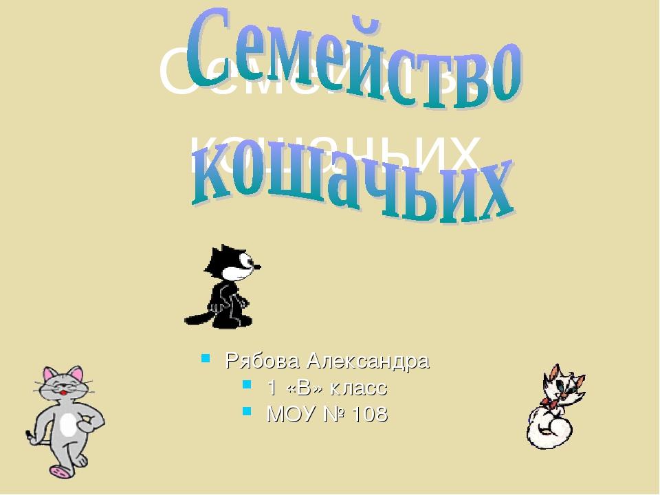 Рябова Александра 1 «В» класс МОУ № 108 Семейство кошачьих