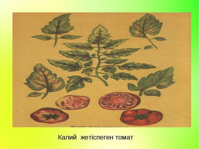 Калий жетіспеген томат