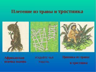 Африканская птичка ткачик Циновка из травы и тростника Плетение из травы и тр