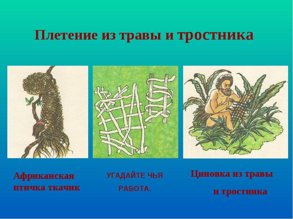 Африканская птичка ткачик Циновка из травы и тростника Плетение из травы и тр...
