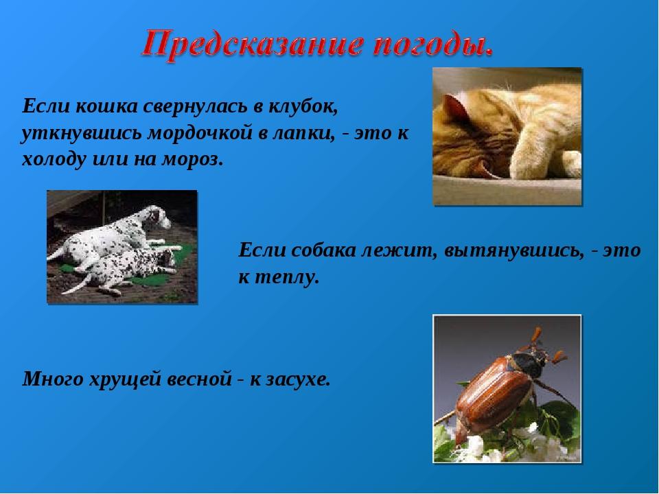 Если кошка свернулась в клубок, уткнувшись мордочкой в лапки, - это к холоду...