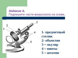 1- предметный столик 2- объектив 3 – окуляр 4 – винты 5 – штатив Задание А. П