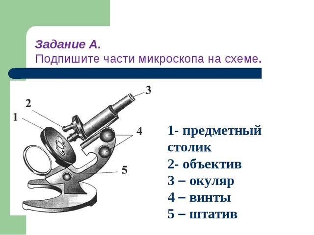 1- предметный столик 2- объектив 3 – окуляр 4 – винты 5 – штатив Задание А. П...