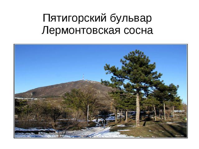 Пятигорский бульвар Лермонтовская сосна