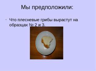 Мы предположили: Что плесневые грибы вырастут на образцах № 2 и 3.