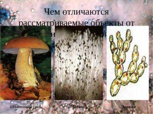 Чем отличаются рассматриваемые объекты от ранее изученных грибов? Шляпочный г
