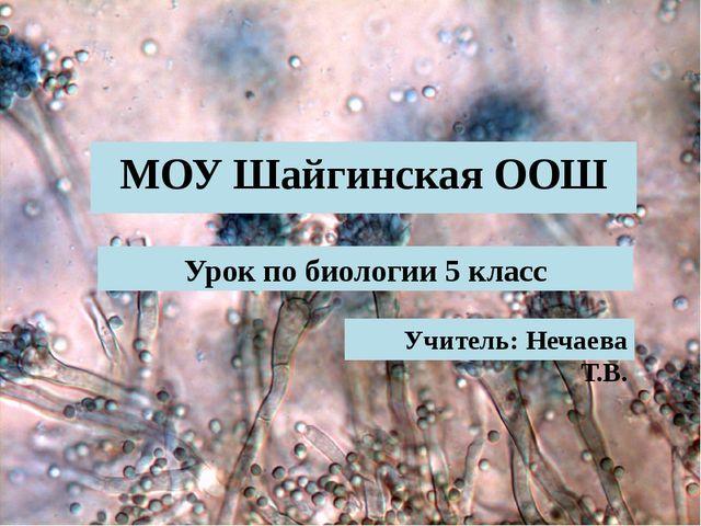 МОУ Шайгинская ООШ Учитель: Нечаева Т.В. Урок по биологии 5 класс