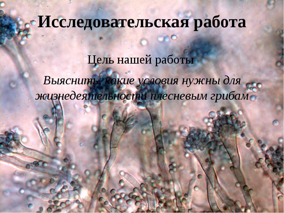 один плесневые грибы картинки для презентации простота эксплуатации
