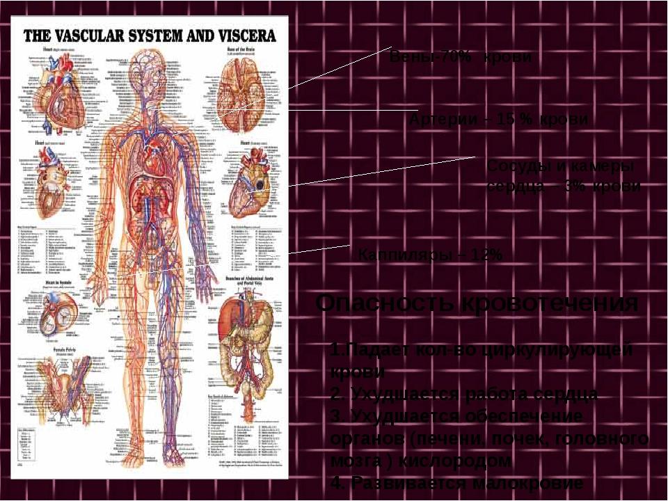 Вены-70% крови Артерии – 15 % крови Сосуды и камеры сердца – 3% крови Каппил...