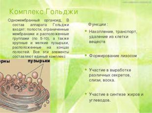 Комплекс Гольджи Одномембранный органоид, В состав аппарата Гольджи входят: п