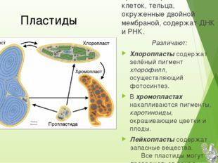 полуавтономные органоиды растительных клеток, тельца, окруженные двойной мемб