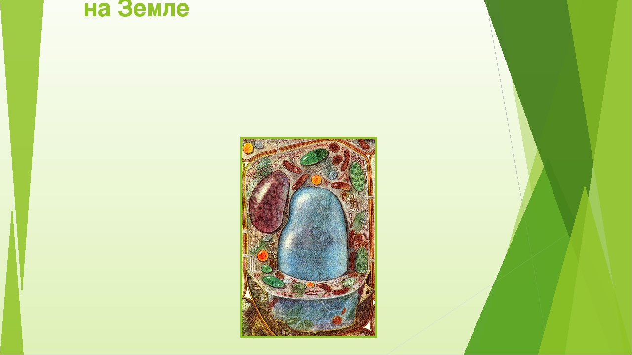 Клетка-элементарная единица жизни на Земле
