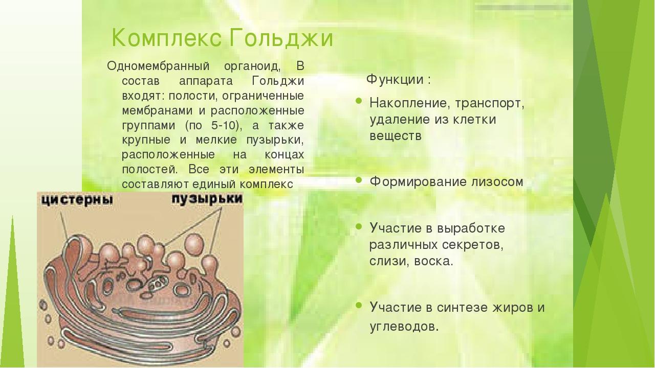 Комплекс Гольджи Одномембранный органоид, В состав аппарата Гольджи входят: п...
