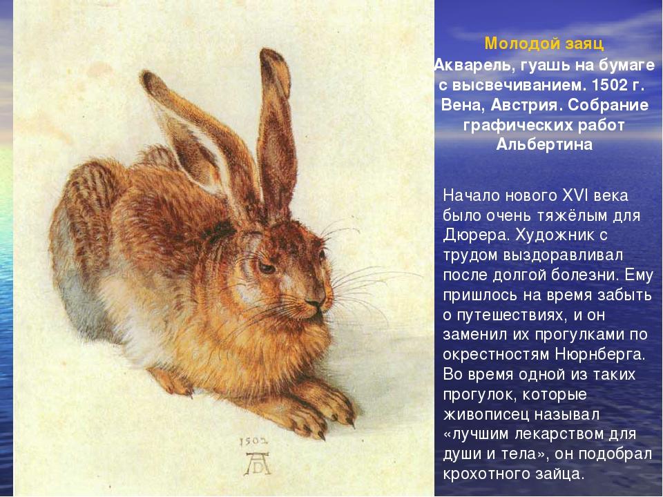 Молодой заяц Акварель, гуашь на бумаге с высвечиванием. 1502 г. Вена, Австрия...