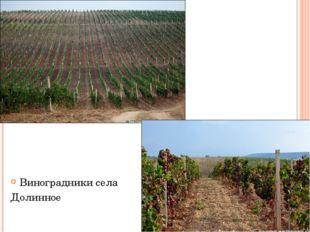 Виноградники села Долинное