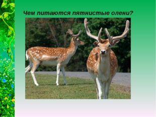 Чем питаются пятнистые олени?