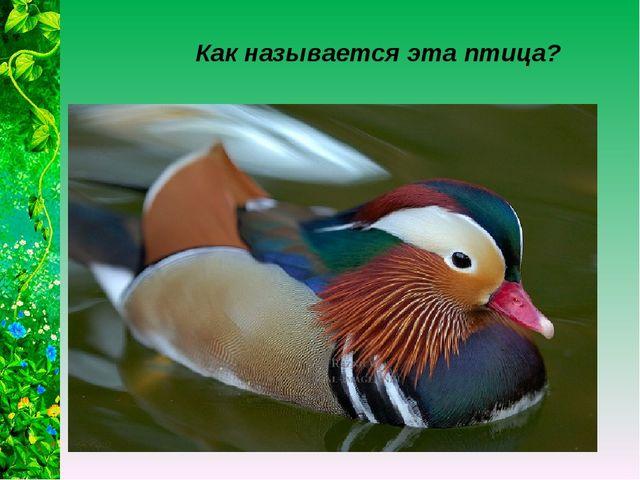 Как называется эта птица?