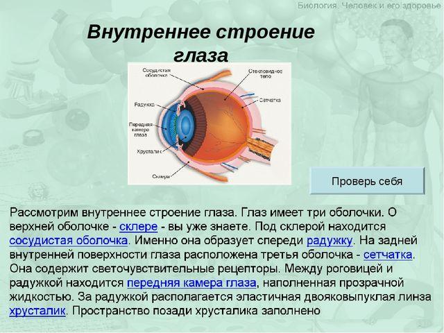 Внутреннее строение глаза Проверь себя