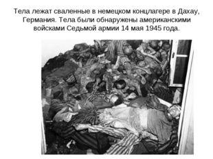 Тела лежат сваленные в немецком концлагере в Дахау, Германия. Тела были обнар