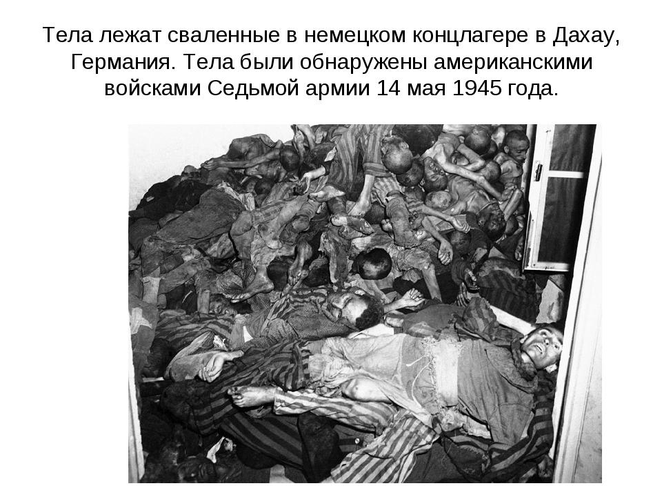 Тела лежат сваленные в немецком концлагере в Дахау, Германия. Тела были обнар...