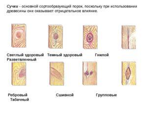 Сучки - основной сортообразующий порок, поскольку при использовании древесины