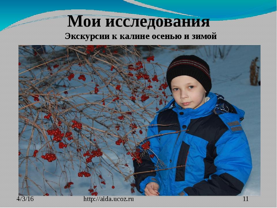 http://aida.ucoz.ru Мои исследования Экскурсии к калине осенью и зимой