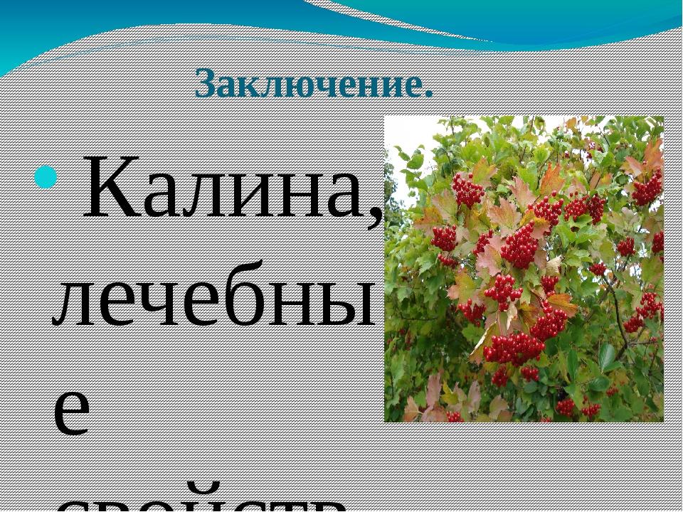 Заключение. Калина, лечебные свойства которой неоспоримы, способна помочь п...
