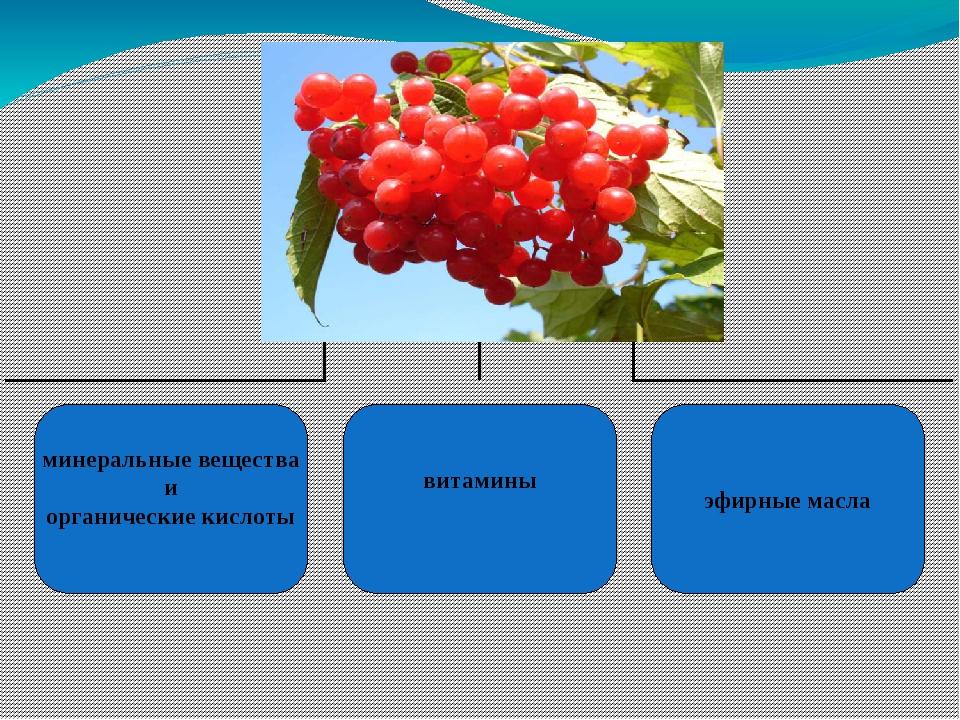 минеральные вещества и органические кислоты витамины эфирные масла