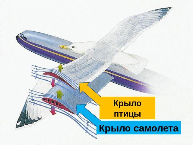 Крыло самолета Крыло птицы