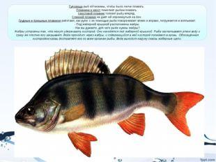 Туловища рыб обтекаемы, чтобы было легче плавать. Плавники и хвост помогают