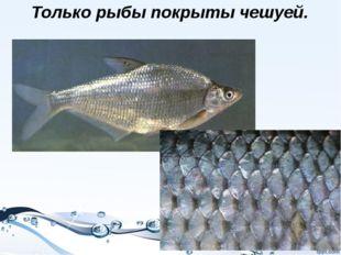 Только рыбы покрыты чешуей.