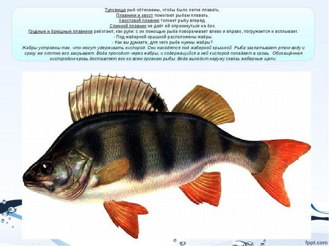 Туловища рыб обтекаемы, чтобы было легче плавать. Плавники и хвост помогают...
