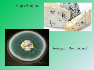 Сыр «Рокфор» Пеницилл Золотистый
