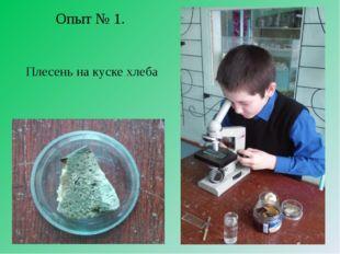 Опыт № 1. Плесень на куске хлеба