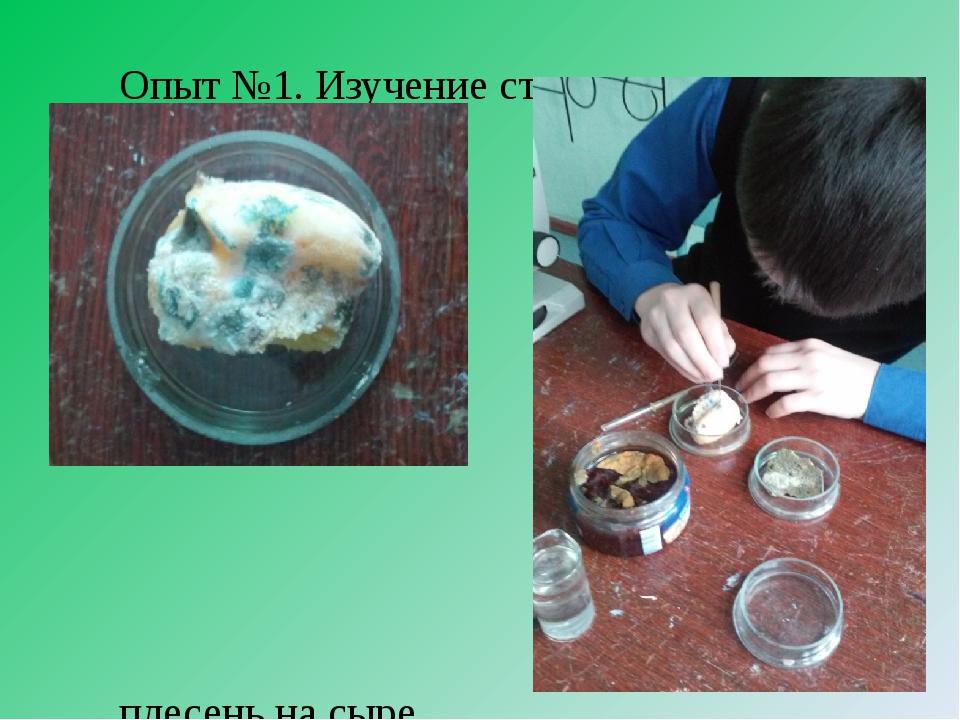 Опыт №1. Изучение строения плесени плесень на куске хлеба плесень на сыре