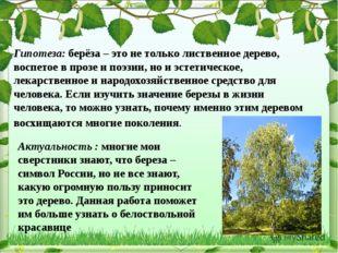 Гипотеза: берёза – это не только лиственное дерево, воспетое в прозе и поэзии