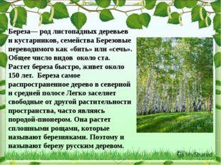 Береза— род листопадных деревьев и кустарников, семейства Березовые переводим