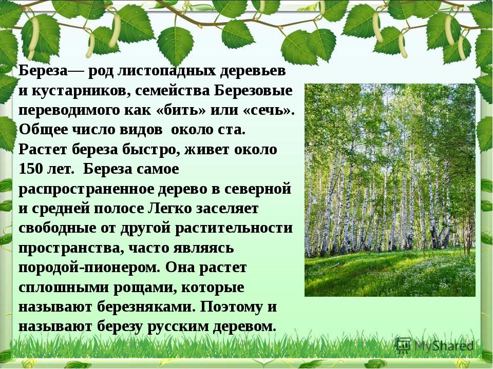 Береза— род листопадных деревьев и кустарников, семейства Березовые переводим...