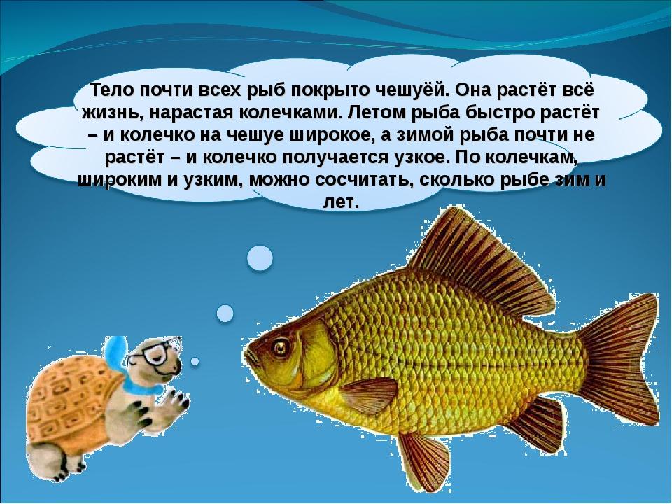 Тело почти всех рыб покрыто чешуёй. Она растёт всё жизнь, нарастая колечками....