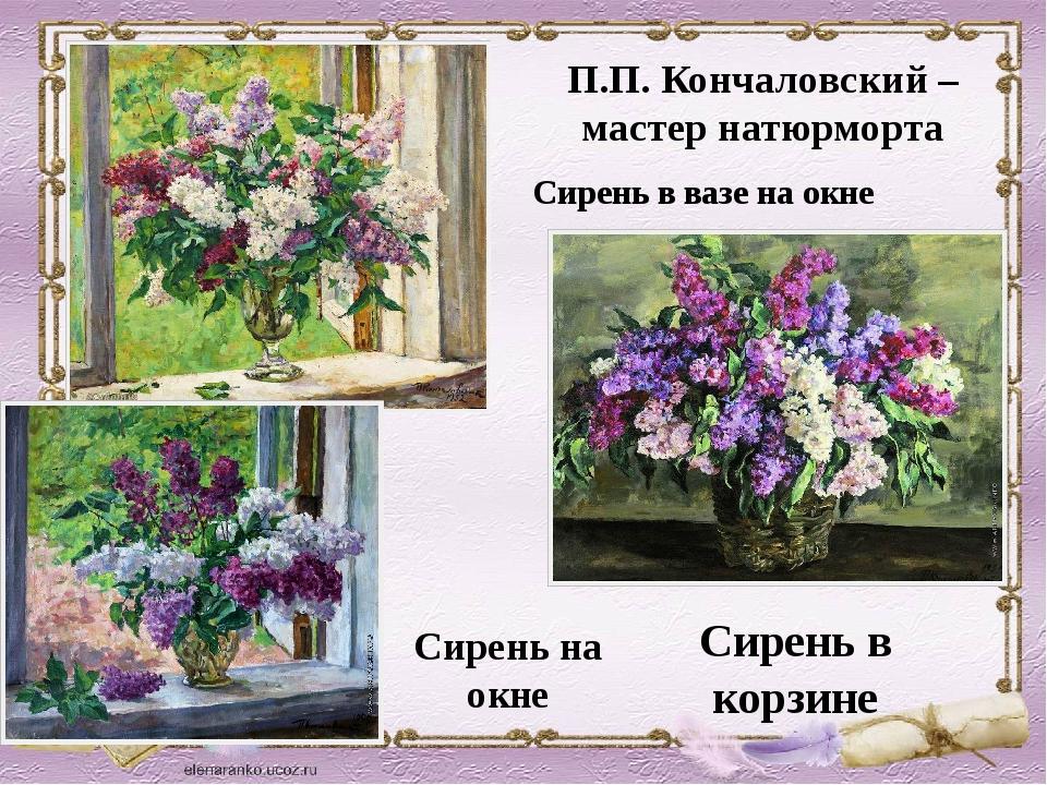 П.П. Кончаловский – мастер натюрморта Сирень на окне Сирень в корзине Сирень...