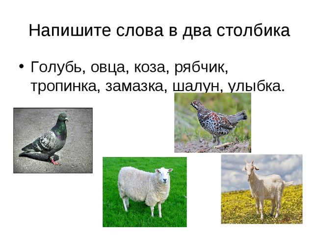 Напишите слова в два столбика Голубь, овца, коза, рябчик, тропинка, замазка,...