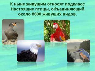 К ныне живущим относят подкласс Настоящие птицы, объединяющий около 8600 живу
