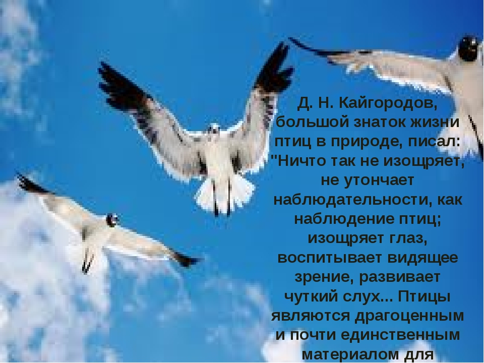 """Д. Н. Кайгородов, большой знаток жизни птиц в природе, писал: """"Ничто так не..."""