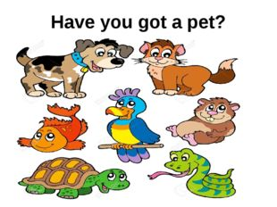 Have you got a pet?