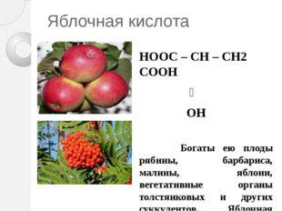Яблочная кислота НООС – CH – CH2 COOH ׀ OH Богаты ею плоды рябины, барбариса,